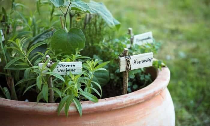 best-garden-markers